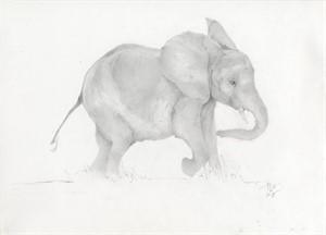 Baby Elephant, 2015