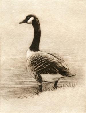 Canada Goose_UF