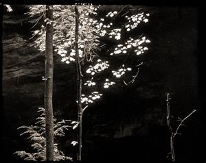 (#251) Poplar Ash Cave (1/34) by Frank Hunter