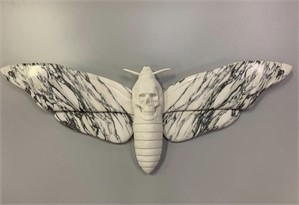 Death's-Head Hawkmoth , 2019