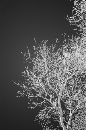 Branching Out, 2018