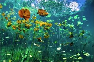Underwater #6, 2019