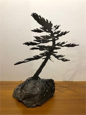 Dancing Pine, 3112