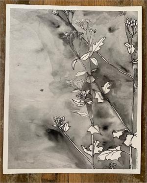 Native Verbena, 2019