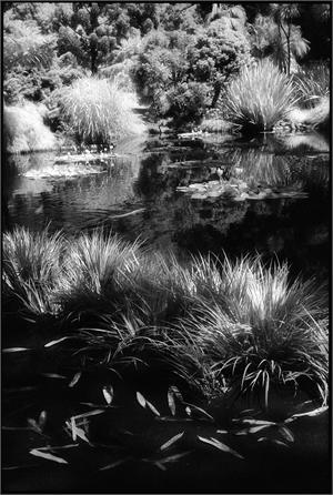 Huntington Gardens XII (/4/10), 2010