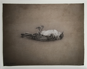 House Sparrow , 2019