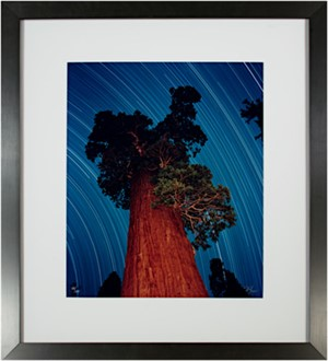 Giant Sequoia Star Trail (48/250), 2003