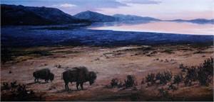 Island Buffalos
