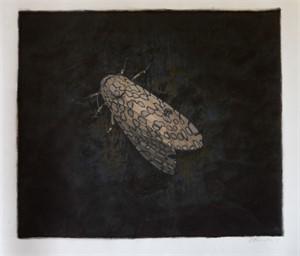 Leopard Moth (1/30)