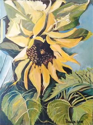 Sunshine Sunflower, 2018