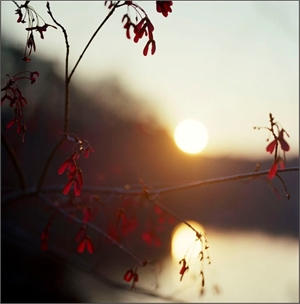 Red Maple, Sunset by Kathryn Kolb
