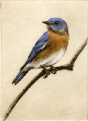 Bluebird_UF