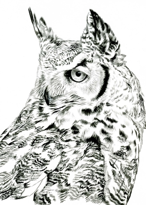 Perceptive, Great Horned Owl by Rebecca Latham