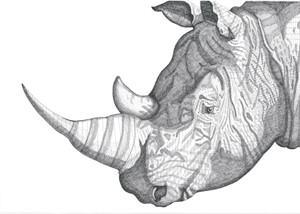Rhinoceros, 2013