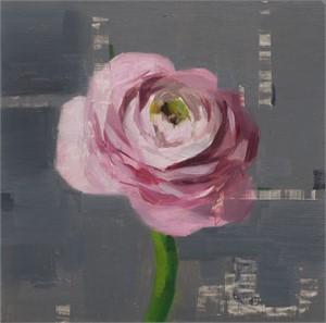 Pink Ranunculus Study