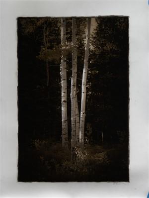 Birch Trees, Utah (1/30)