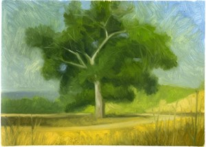 Briones (landscape with oak) by Ocean Quigley