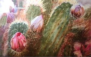 Cactus Glory, 2019