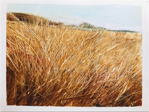 Marsh Grasses, 2019