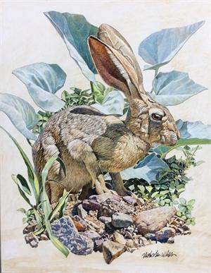 Desert Hare, 2020
