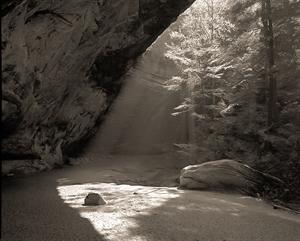 (#109) Backlit Trees, Morning Light,  Ash Cave by Frank Hunter