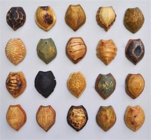 20 Terrapin Shells , 2017