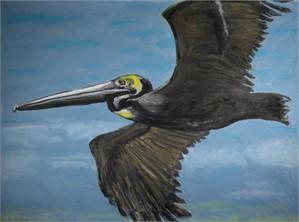 Pelican, 2017