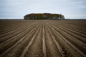 Plowed Field, Goldman, LA by Forest McMullin
