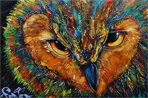 Owl 182528