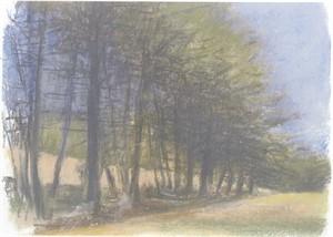 Path Under Pines, 2005