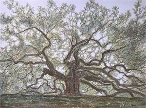 Angel Oak - Misty Morning