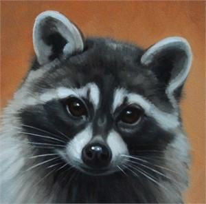 Raccoon Portrait, 2019