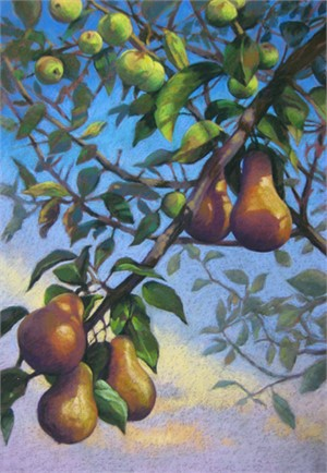 Prussian Pears