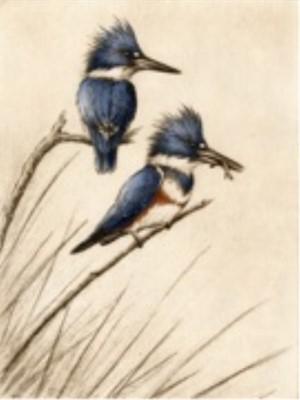Kingfishers_UF