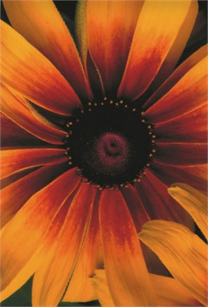 Teri's Garden, Galardia, 1994/2004