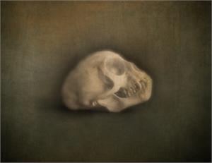 Vervet Monkey Skull, 2019