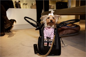 Prada at Saks 5th Avenue, from the Canine Kingdom Series, New York, New York