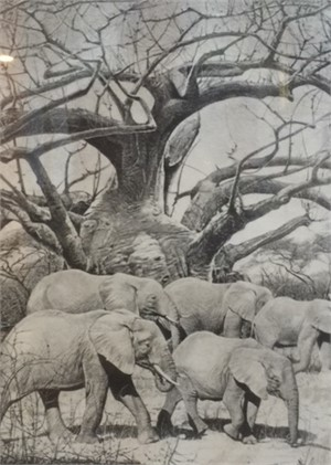 Elephants and Baobab Tree (132/260)
