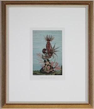 Holothurians And Sea Star, 1885