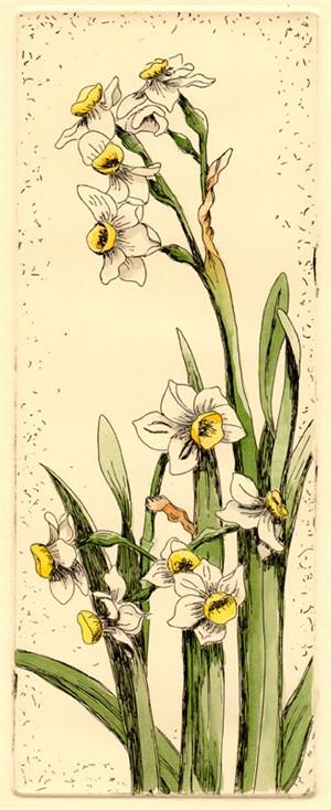 Narcissus (3/50), 2018