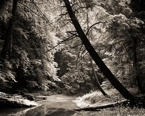 (#249) Tree, Grass Cedar Falls by Frank Hunter