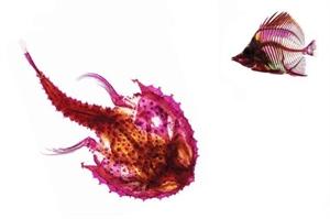 RIP Batfish and Butterflyfish Framed, 2014