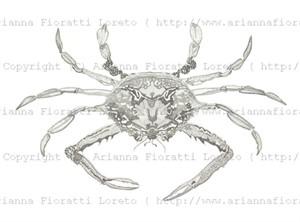 Crab, 2011