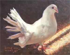 White Dove 21