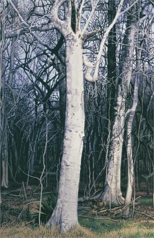Hackberry Tree in Winter