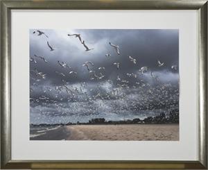 Lake Michigan Seagulls In Flight #6 by Joan Dvorsky
