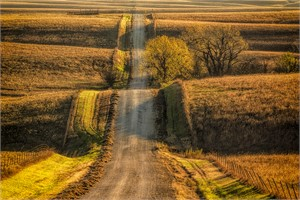Country Road II