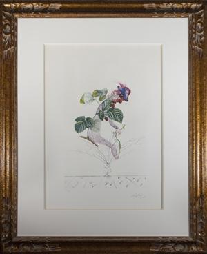 Framboisier (Raspberry Bush), from the series Flordali (Les Fruits) (133/200), 1969/70