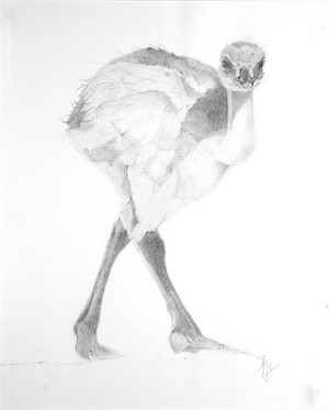 Baby Ostrich, 2015