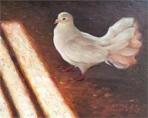 White Dove 17